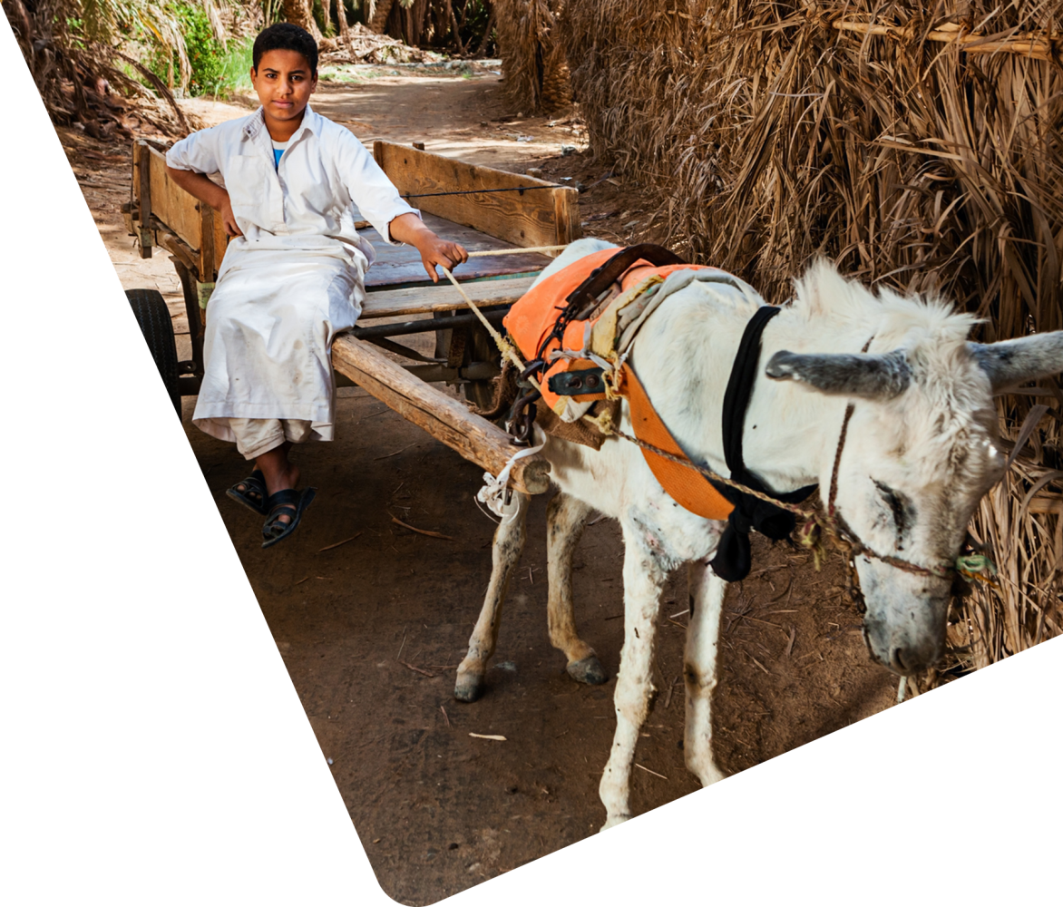 Egyptian boy with donkey and cart
